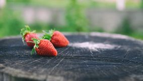 Nya jordgubbar ligger på ekstubben, sidosikten, format för baner 16x9 med kopieringsutrymme för text Arkivfoto
