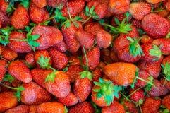 Nya jordgubbar med bladet Royaltyfri Bild