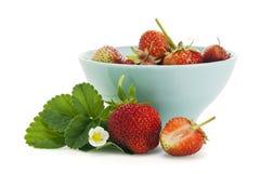 Nya jordgubbar med den isolerade blomningen och bladet Arkivbilder