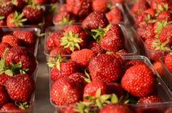 Nya jordgubbar på den utomhus- marknaden Royaltyfri Bild