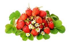 Nya jordgubbar på gröna sidor som isoleras på vit bakgrund Arkivfoto