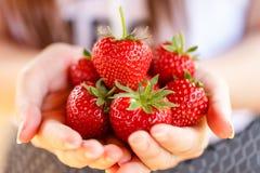 Nya jordgubbar som väljs från en jordgubbelantgård Royaltyfri Bild