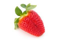 Nya jordgubbar stänger sig upp på vit bakgrund arkivbilder