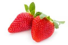 Nya jordgubbar stänger sig upp på vit bakgrund arkivfoto