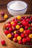 Nya körsbärsröda plommoner Fotografering för Bildbyråer