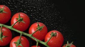 Nya körsbärsröda tomater på en svart bakgrund Gruppen av den nya körsbärsröda tomaten med vatten tappar arkivfilmer