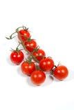 Körsbärsröda tomater på vine. Arkivfoto