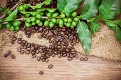 Nya kaffebönor på wood bakgrund Royaltyfri Fotografi