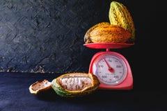 Nya kakao och kakaofröskidor arkivbild