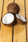 Nya kokosnötter Arkivfoton