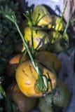 Nya kokosnötter Arkivbild