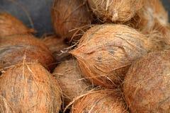 Nya kokosnötter Fotografering för Bildbyråer