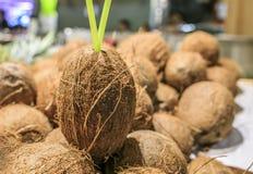 Nya kokosnötter i en marknad av Barcelona Arkivbilder