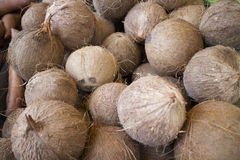 Nya kokosnötter på öppet luftar marknadsför Fotografering för Bildbyråer
