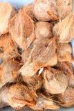 Nya kokosnötter Royaltyfri Bild