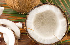Nya kokosnötter i variosformer Arkivfoton