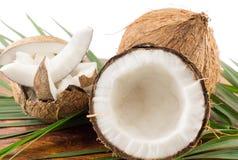 Nya kokosnötter i variosformer Royaltyfria Foton