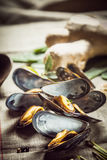 Nya kokta musslor för en havs- matställe Royaltyfri Bild