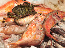 Nya krabba och fiskar på is Arkivbild