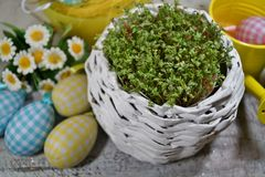 Nya kryddkrasse och kanin och easter ägg Royaltyfri Fotografi