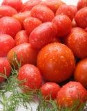 Nya, läckra och smakliga tomater Royaltyfri Fotografi