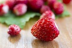 Nya lösa jordgubbar på bladet och tabellen, sund näring, närbildmakro Fotografering för Bildbyråer