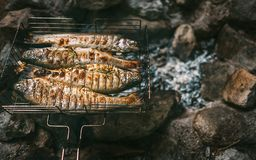 Nya lagade mat foreller är i grillat raster Royaltyfria Foton