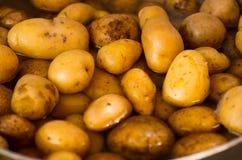 Nya lagade mat potatisar på en panna, typisk andean mat Royaltyfria Bilder