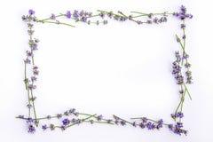 Nya lavendelblommor och blåbär som är ordnade i cirkel på en vit bakgrund Lavendel blommar, och blåbär förlöjligar upp Royaltyfria Bilder