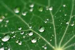 nya leafraindrops Royaltyfri Fotografi