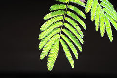 nya leaves för bakgrund Arkivbilder