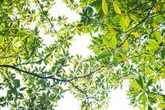 nya leaves för bakgrund Royaltyfri Fotografi