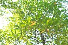 nya leaves för bakgrund Arkivbild