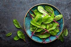 nya leaves för chard Arkivfoto