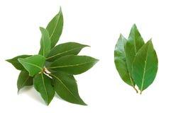 nya leaves för fjärd Royaltyfria Foton