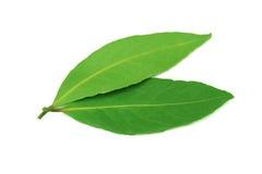 nya leaves för fjärd fotografering för bildbyråer