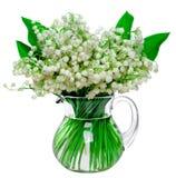 Nya liljekonvaljer i en glass krus som isoleras på vitbaksida Fotografering för Bildbyråer