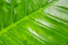 Nya linjer design för grönt bakgrundsväxtblad för flora för grund för modeller för ribbad växtbanan tropisk diagonal arkivbilder
