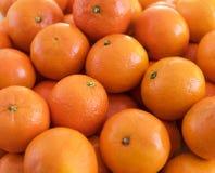 Nya mandarinapelsiner Fotografering för Bildbyråer