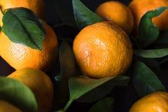 Nya mandarines med sidor Royaltyfri Fotografi