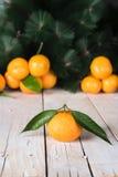 Nya mandarines med sidor Arkivfoto