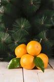 Nya mandarines med sidor Royaltyfri Bild