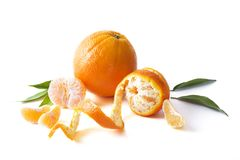 Nya mandarines som isoleras på vit bakgrund Apelsiner är ordnade i rader Fotografering för Bildbyråer