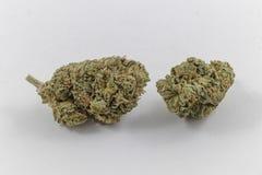 Nya marijuanaknoppar arkivbilder