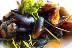 Nya medelhavs- musslor Arkivbild