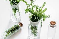 Nya medicinska örter i exponeringsglas på vit bakgrund Royaltyfri Fotografi
