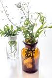 Nya medicinska örter i exponeringsglas på vit bakgrund Arkivfoto