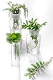 Nya medicinska örter i exponeringsglas på vit bakgrund Fotografering för Bildbyråer