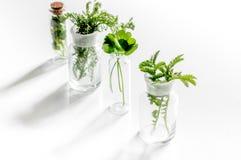 Nya medicinska örter i exponeringsglas på vit bakgrund Royaltyfri Foto