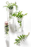 Nya medicinska örter i exponeringsglas på vit bakgrund Royaltyfria Bilder